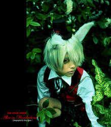 In the Mood for Wonderland... by Akusesu