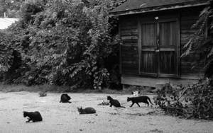 Feral cat community by KariAnnLax