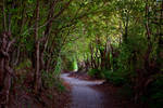 Road Through Vineyards by batmantoo