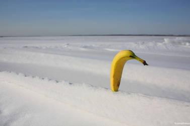 The Secret Life of Bananas by KeswickPinhead