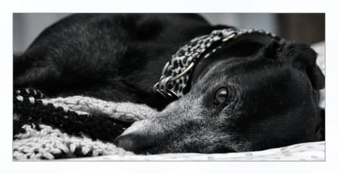 Greyhound by DaredevilTaoist
