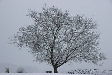 A little snow... some nice pictures #02 by Gerfer