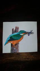 Kingfisher by NightfallSiren