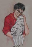 Hedwig in Harm's Way by NicoPony