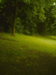 forest Bokrijk by AzurylipfesStock