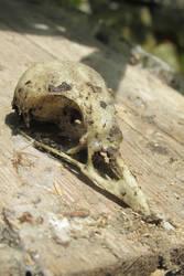 AzurylipfesStock2017-Bird skeleton head (5) by AzurylipfesStock