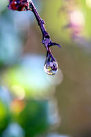 Drop of life by dyingrose24