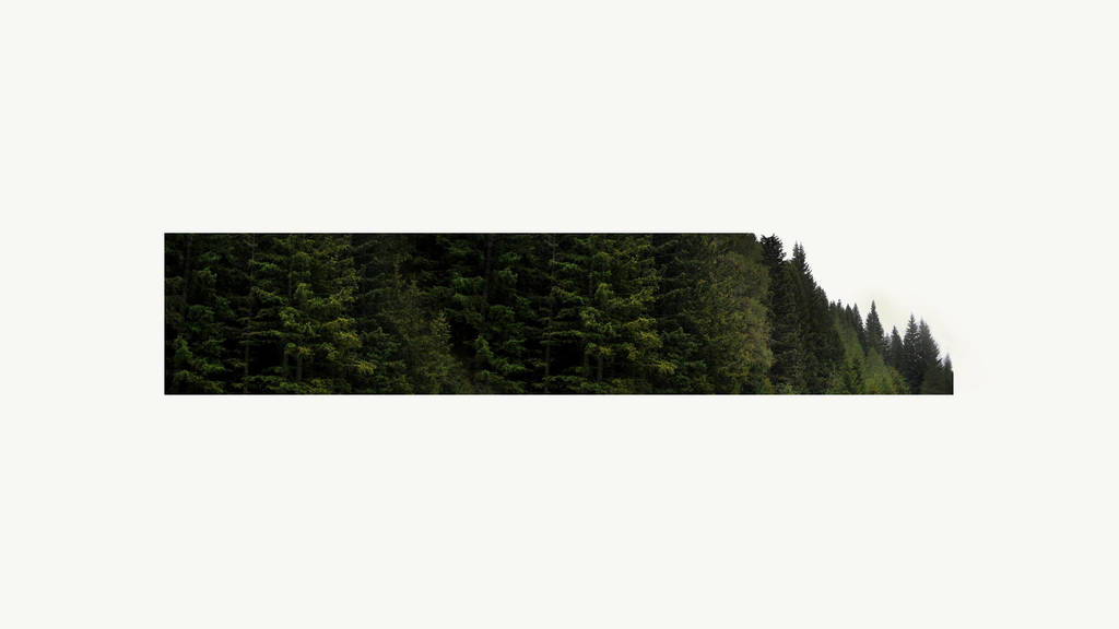Fancy Forest by ViRPo