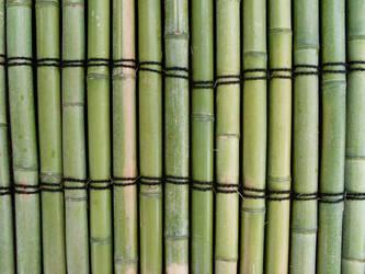 Bamboo in Hiroshima by reschool