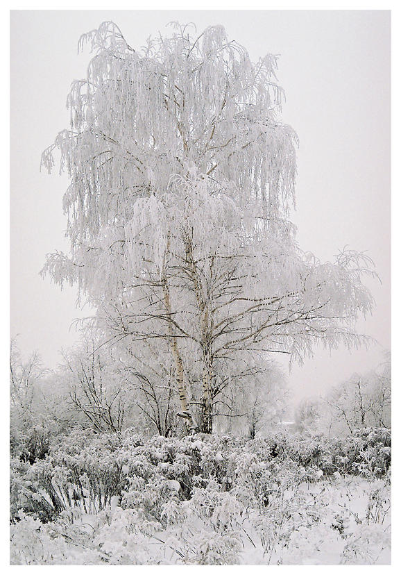 Winter IV by aare