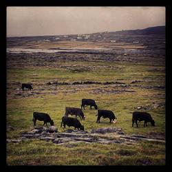 Greener Pastures IV by aare