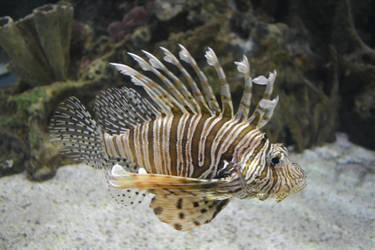 lionfish by BrokenSpaceAngel