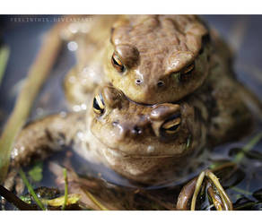 frogs by FeelinThis