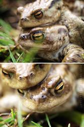 Frogs III by FeelinThis