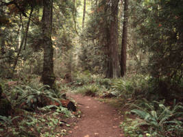 Rainforest Path by midnightstouchSTOCK