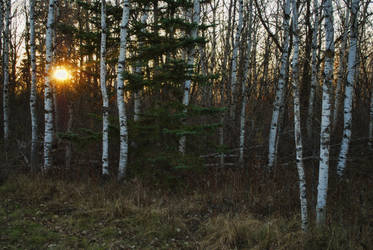 Forest Sundown by midnightstouchSTOCK