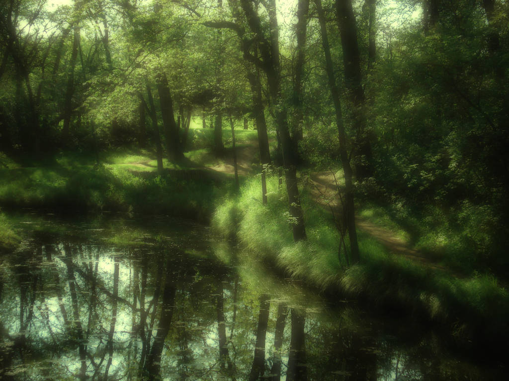 The Fairy Woods 2 by midnightstouchSTOCK
