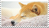 the sleepy shibe by babykttn