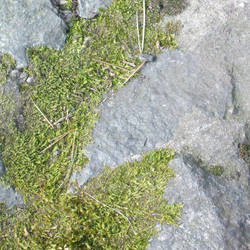 Moss on rock and concrete by billmbabblefotostok