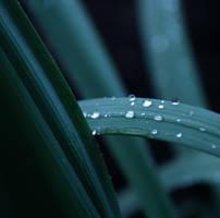 Rain on leaves I by propan3