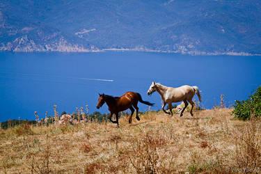 Horses on the Edge by Harleyyfr