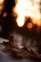 Winter by niesad