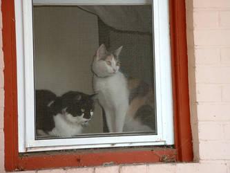 Window Watchers by tango793