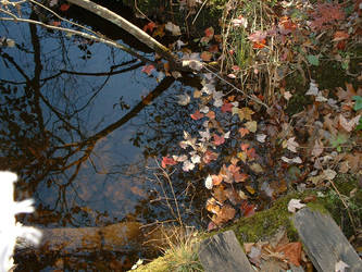 Leaves and Water by tango793