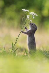 Flower Dance by JulianRad