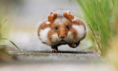 Chubby Cheeks by JulianRad