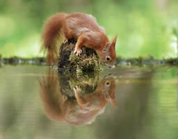 Mirror, Mirror... by JulianRad