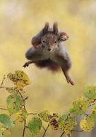 Kung Fu Squirrel by JulianRad