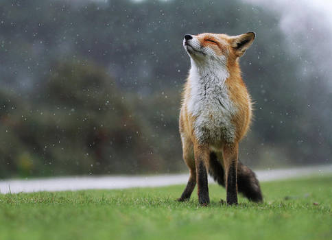 Enjoying the Rain... by JulianRad