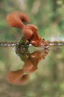 Yoga Squirrel by JulianRad