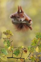 Supersquirrel by JulianRad