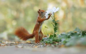 Florist by JulianRad