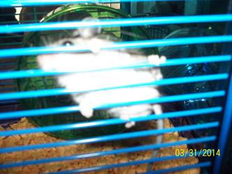 Hi, i'm Remy! by Rushigi