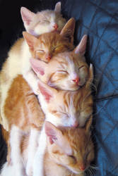 CatStack II by roes