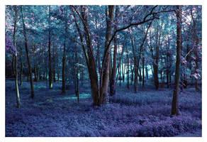 forest of indigo by battie