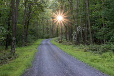 Early Morning Sunlight in Rothrock State Forest by kyleshikes