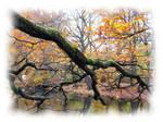 Autumn: Asdonk 2 by xLuc1fersAngelx