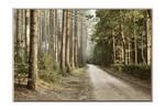 Forest trail by xLuc1fersAngelx