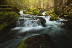Woodland Cascades by brandtcampbell