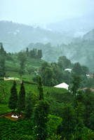 Fog On The Tea Fields 2. by bigzoso