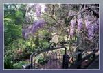 Springtime Kookaburra by redmatilda