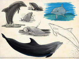 Bottlenose Dolphin Sketchpage by Bandarai