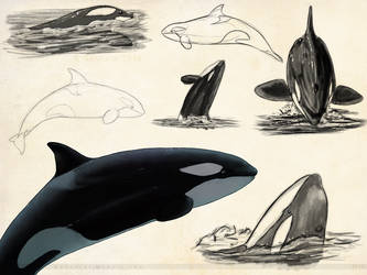Orca Sketchpage by Bandarai
