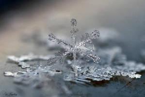 Snowflake by gulbagge