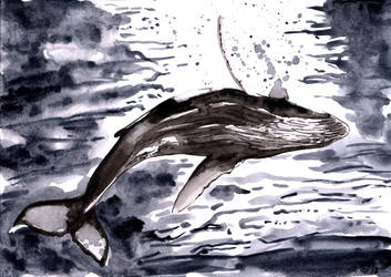 Whale by emalterre