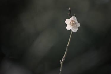Umeshu by unifx